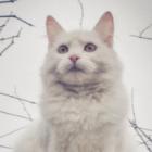 .-Cats_Team-.