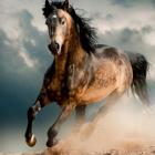 .julia_horses.