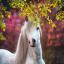 Horse_Enjoy.