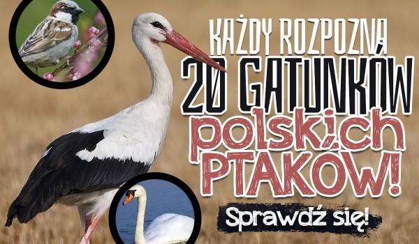 Każdy rozpozna te 20 gatunków polskich ptaków!
