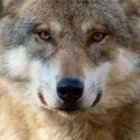 Potterwolf17