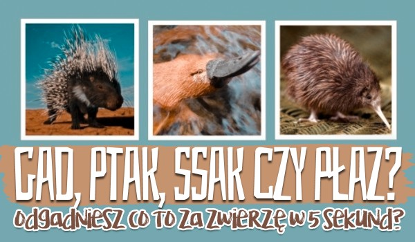 Gad, ptak, ssak czy płaz? Odgadniesz co to za zwierzę w 5 sekund?