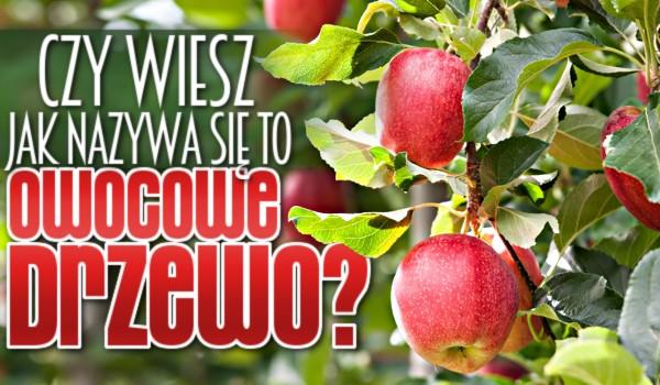 Czy wiesz, jak nazywa się to owocowe drzewo?