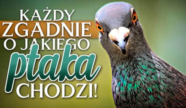 Każdy zgadnie, o jakiego ptaka chodzi!