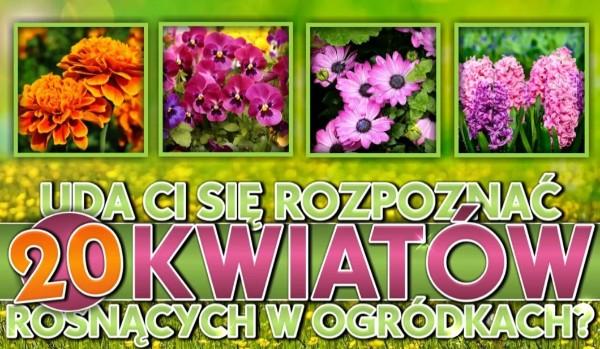 Uda Ci się rozpoznać 20 kwiatów rosnących w ogródkach?