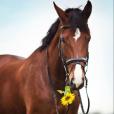 .Flower.Horse.