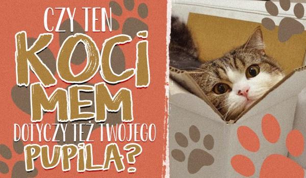 Czy ten koci mem dotyczy również Twojego pupila?