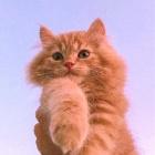 Ami_Cat