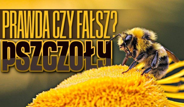 Prawda czy fałsz? – Pszczoły!