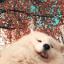 shinee_dog