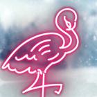 Snowy_flamingo