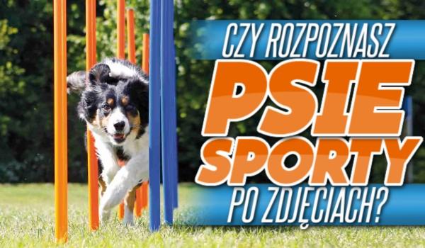 Czy rozpoznasz psie sporty po zdjęciach?