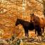 _Horses.