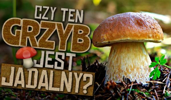 Czy ten grzyb jest jadalny?