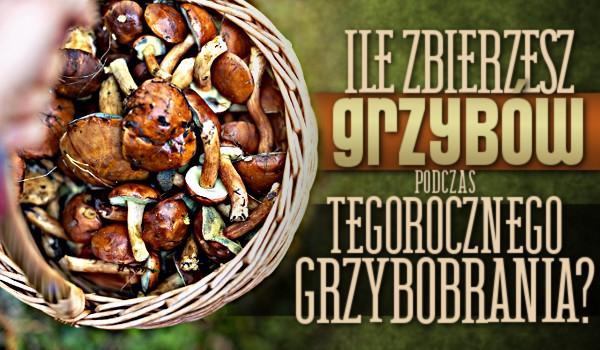 Zdrapka: Ile zbierzesz grzybów podczas tegorocznego grzybobrania?