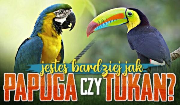 Jesteś bardziej jak papuga czy tukan?