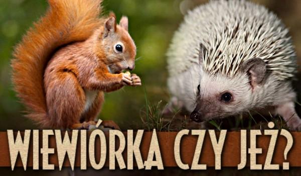 Wiewiórka czy jeż? – Test!