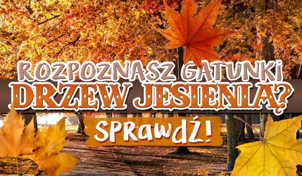 Czy rozpoznasz gatunki drzew jesienią?