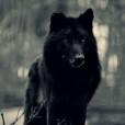 Winter_wolfik