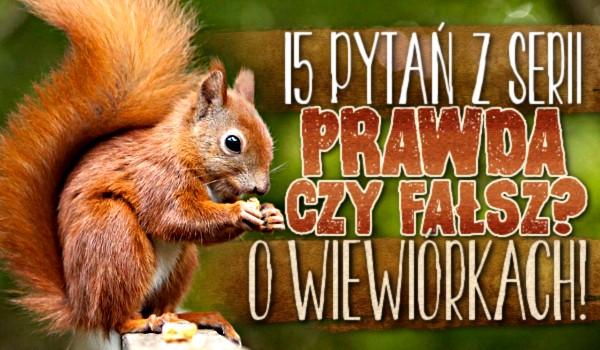 """15 pytań z serii """"Prawda czy fałsz"""" o wiewiórkach!"""