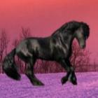 Alaska.horse
