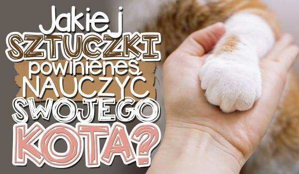 Jakiej sztuczki powinieneś nauczyć swojego kota?
