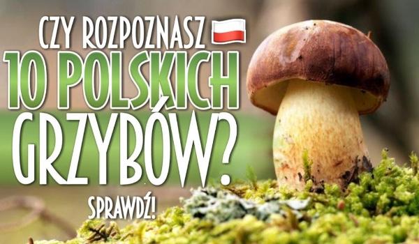 Czy rozpoznasz 10 polskich grzybów?