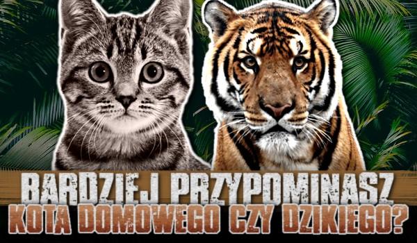 Bardziej przypominasz kota domowego czy dzikiego?
