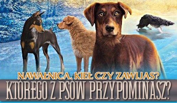 Nawałnica, Kieł czy Zawijas? Którego z tych psów przypominasz?
