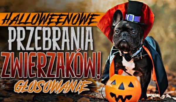 Halloweenowe przebrania zwierzaków!